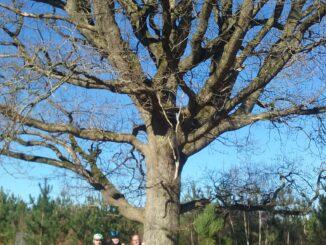 3 vététistes heureux sous un arbre remarquable, et moi, et moi, et moi !